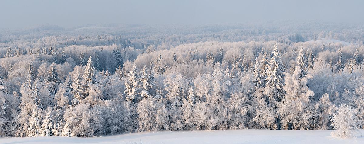 Kõige ilusam jõulupuu linna ei tule...
